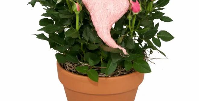Rosentraum mit Herz