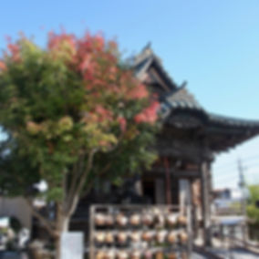 目薬の木と本堂