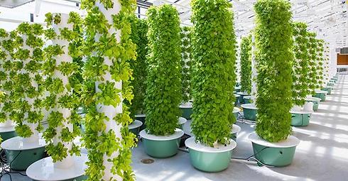 Vertical farming technique growing at A&