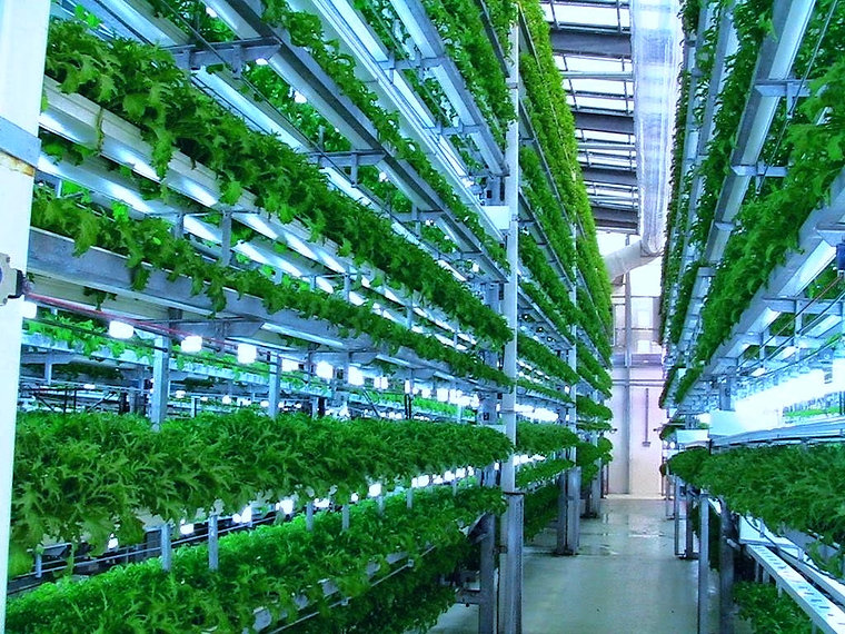 Is%20Vertical%20Farming%20the%20answer%20to%20solving%20overpopulation_%20%E2%80%94%20Steemit_edited