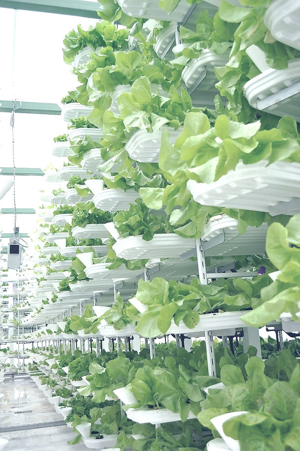 How%20Vertical%20Farming%20is%20Revolutionizing%20the%20Way%20We%20Grow%20Food%20(1)_edited.jpg