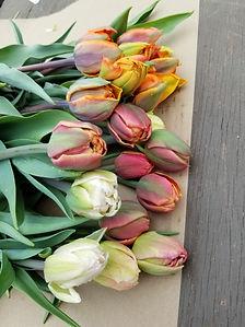 tulipes mai 2019.jpg