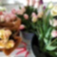 tulipes fin mai 2019.jpg