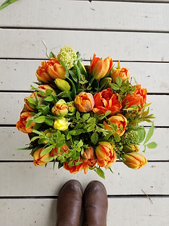 tulipes monte orange.jpg
