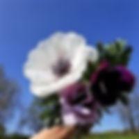 anemones 2019.jpg