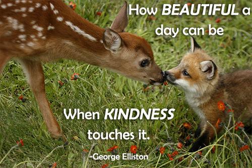 fox_deer_kindness_2