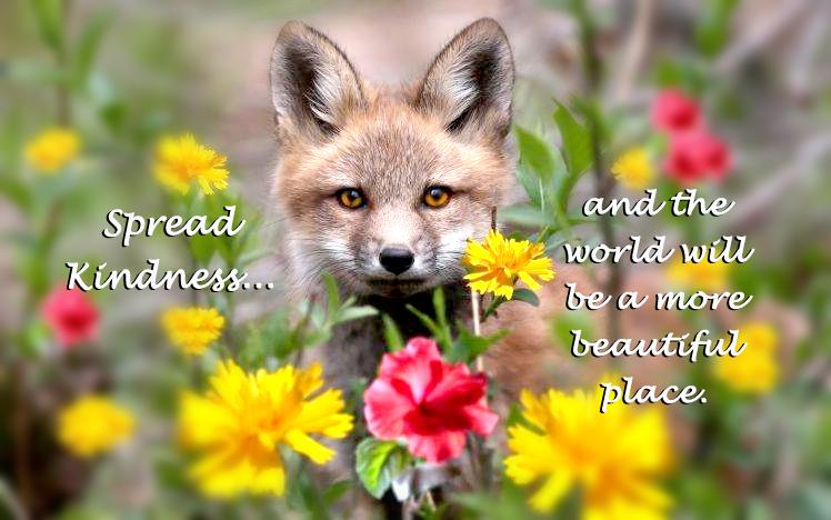 Fox Kindness Flowers_Spread Kindness2