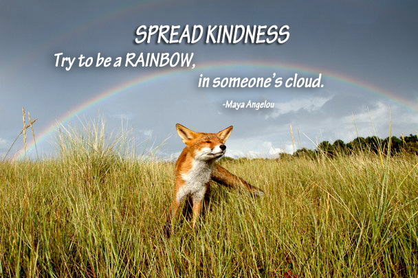fox with rainbow kindness quote