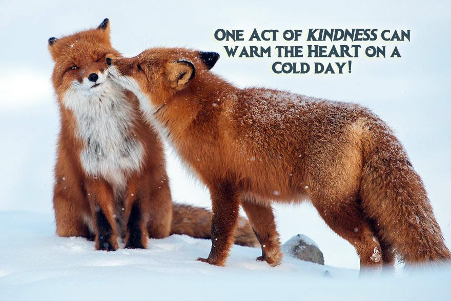 Fox Winter 5
