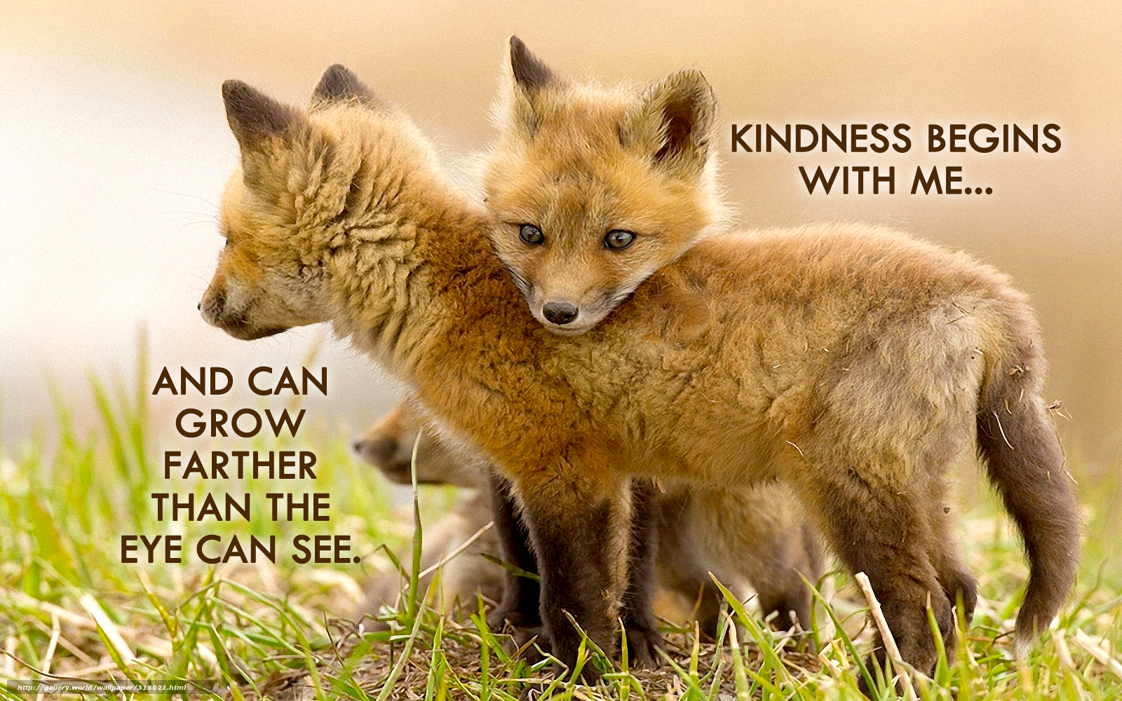 Kindness Quote Begins with Me_3