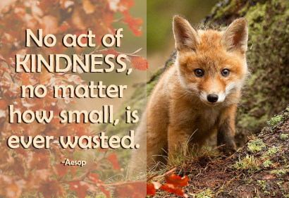 Kindness quote 11