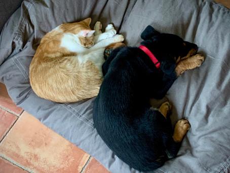 La paix règne entre chat et chien - Finally truce between cat and dog - Rust tussen kat en hond