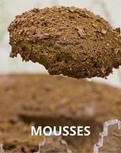 MOUSSES_2x.png