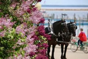 Lilac Pic.jpeg