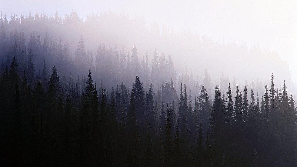 mist_Trees_forest_1920x1080.jpg