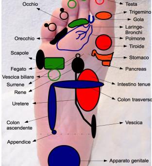 Tiroide: una visione olistica ed un accenno al trattamento mediante riflessologia plantare