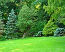 Wraxall ~Somerset Garden