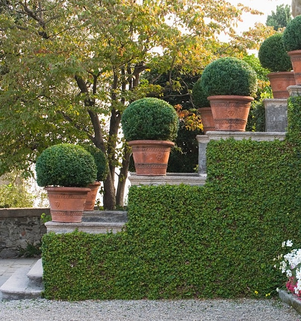 Hedge Trimming & Topiary Specialists