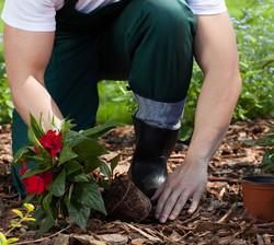 Planting Service