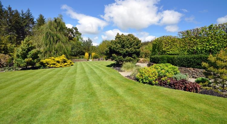 Beautiful lawn & garden in Thornbury