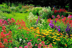 Beautiful Summer Garden~ Allerton in Somerset