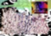 superorganism 5.jpg