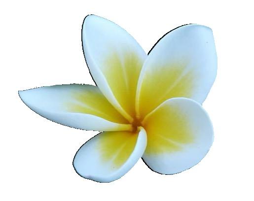 Bali Flower Lisette Lucas EnergyJoy