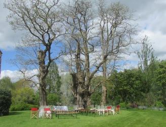 Talton House acacias Stratford-Upon-Avo, as old as Queen Ann House