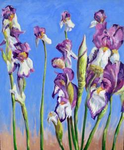 Irises. Oil on panel. 15.5 in. x 19 in. $175