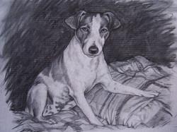 Pup.jpg charcoal on paper.jpg  18 in.jpg x 24 in.jpg  2007.jpg  commissioned at $250.jpg00.jpg  SOLD