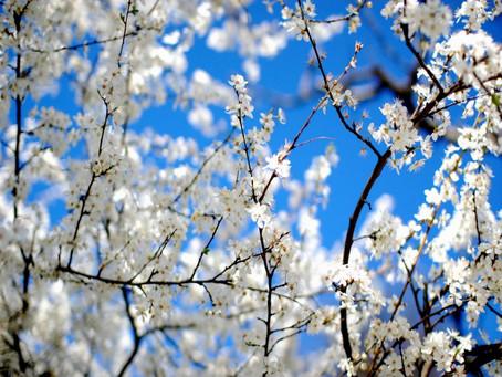Le printemps (Chun)