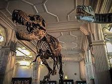 manchester museum.jpg