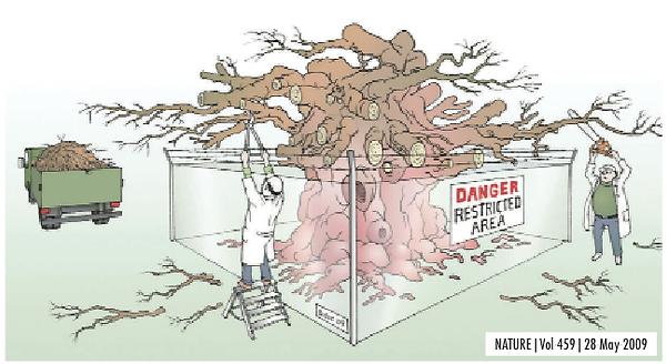 immagine del cancro come albero da potare ideata da Robert Gatenby