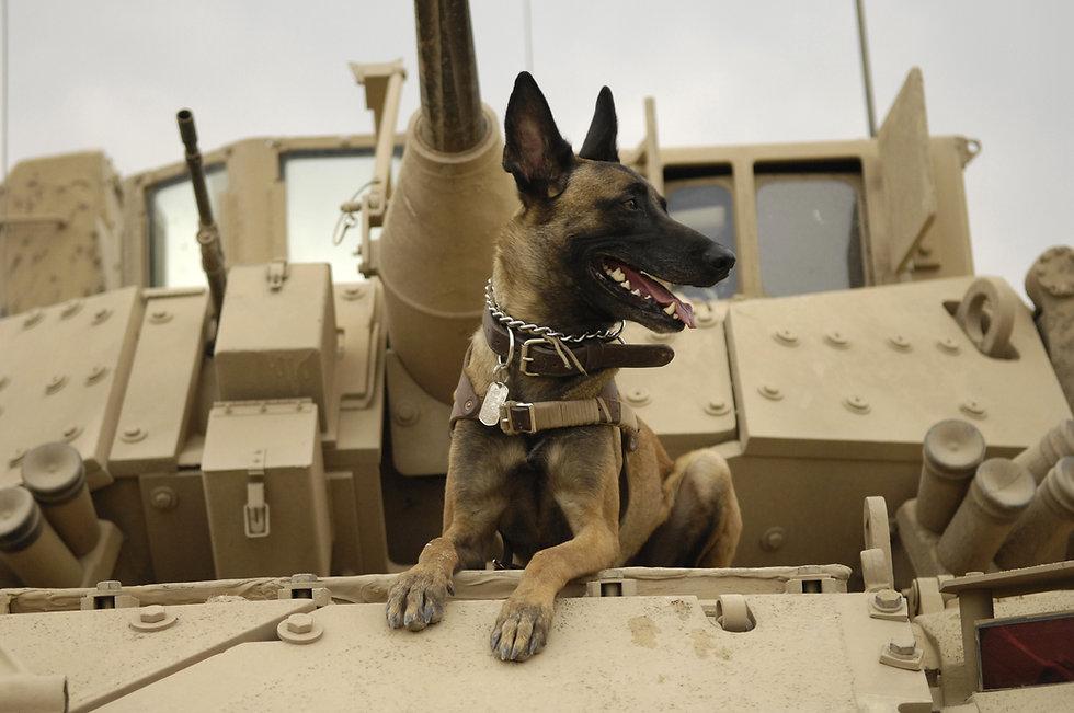 U.S._Air_Force_military_working_dog_Jack