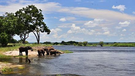 zambezi-national-park-1.jpg