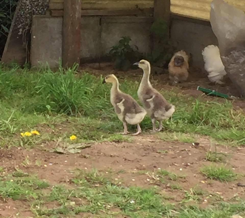 Springtime Babies | Gites Le Bisson