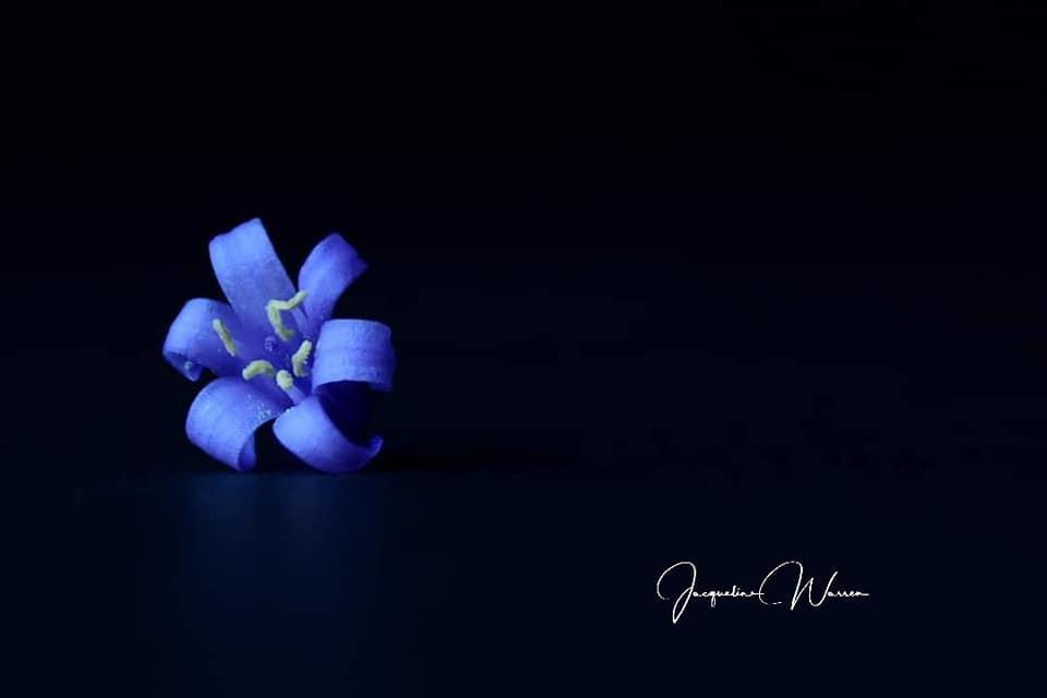 Single bluebell flower