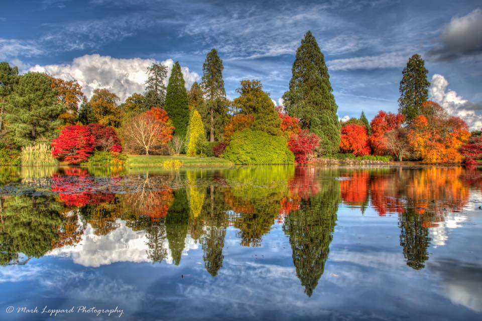 Trees reflected in water in Autumn