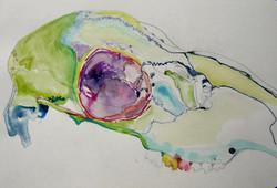 Watercolor, Graphite on Paper