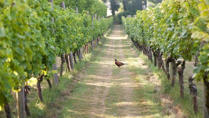 danebury-vineyards-celebrates-25-year-1.