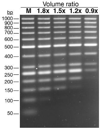 CleaniBeads - gradient_QC BW.jpg