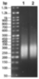 Cleanibeads - ctDNA library.jpg