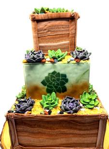 Multi-Tier Succulent Cake