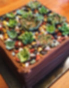 Succulent Garden   Artful Sweets LLC