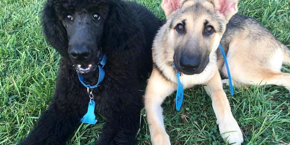 SUNDAY Sept 13, 2020 @ 2 PM BASIC MANNERS DOG CLASS