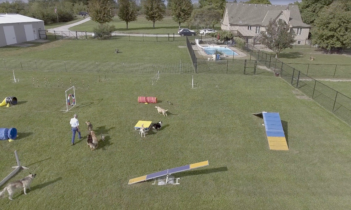 Agility course, studio, home/kennels