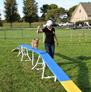 Once your dog learns basic manners, you can begin the fun of agility training