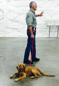 Dog training with Ken in our studio