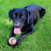Nick's dog Titan playing ball after dog training