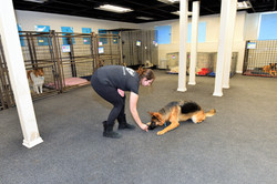 1-on-1 dog training in the kennel